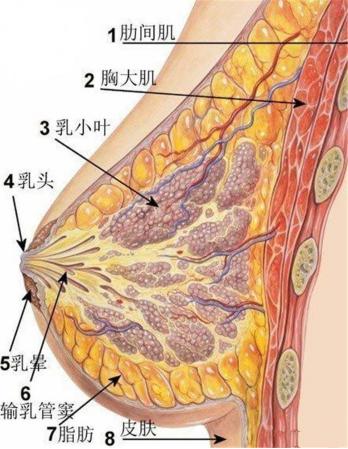 生完孩子后乳房一定会下垂吗?