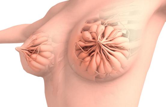罩杯升级、乳房胀痛、变黑...... 孕期乳房这些变化正常吗?