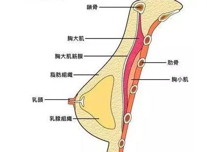 """""""胸""""险就在身边,乳腺癌青睐6类人,你知道多少?"""