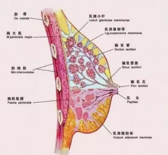 80%女人都有的乳腺增生、乳腺结节,该如何买保险?