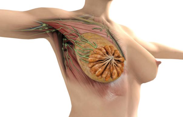 4类女性更易乳腺增生!应该如何护理?